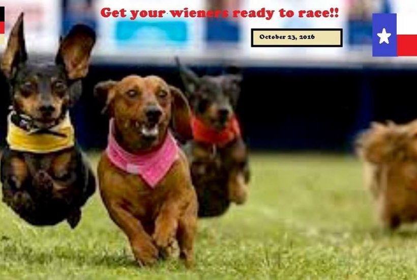 Weiner dog race